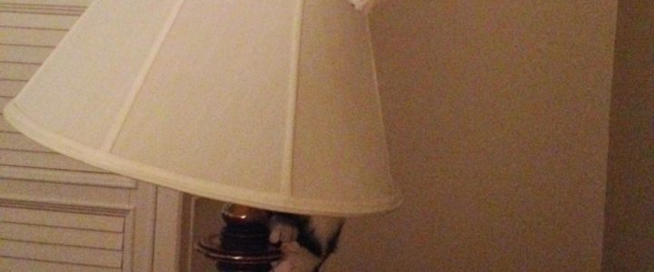 cute-cat-in-lamp-shade