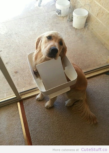 dog-stuck-in-garbage-can-lid