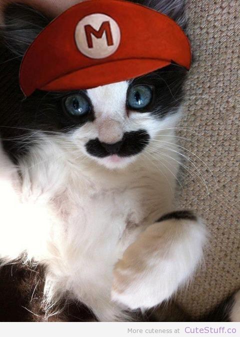 mario_cat